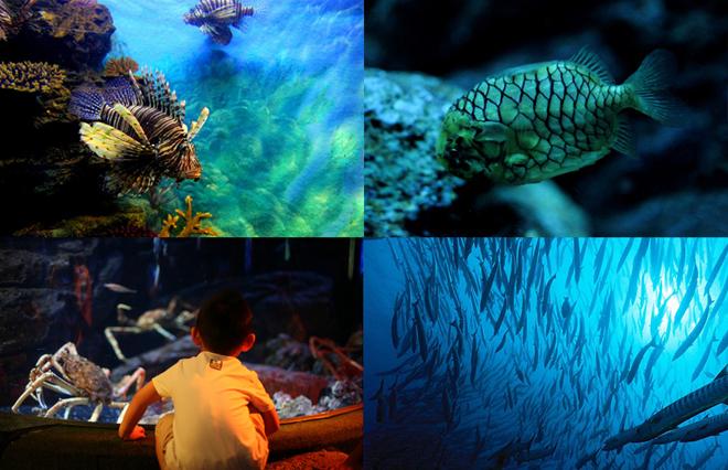 Sea Life Bangkok Ocean World,Siam Ocean World,Sea Life Bangkok Ocean World Q&A,Q&A Siam Ocean World