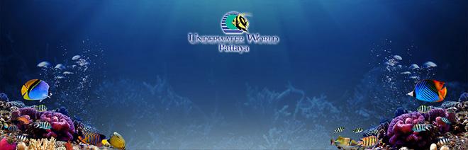 Underwater World Pattaya Price,Underwater World Pattaya price 2015,Underwater World Pattaya   discount price,Underwater World Pattaya child price,Underwater World Pattaya official price,Underwater World Pattaya ticket price,Underwater World Pattaya cheap ticket