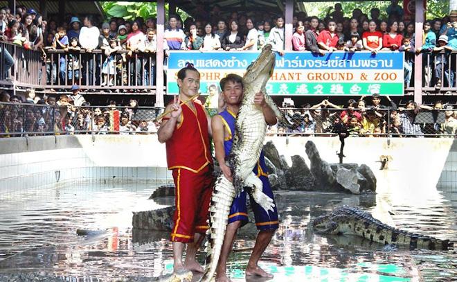 Samutprakarn Crocodile Farm & Zoo Cheap Ticket 2015,Bangkok Crocodile farm Cheap Ticket 2016,Samut Prakan Crocodile Farm and Zoo cheap ticket price,Samutprakarn Crocodile farm and zoo E-ticket,Samutprakarn Crocodile farm and zoo attractions,Samutprakarn Crocodile farm and zoo shows,Samutprakarn Crocodile farm and zoo child ticket,travel in Bangkok,Thailand attractions for kids