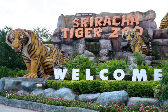 Sriracha Tiger Zoo entrance fee 2015,Sriracha Tiger zoo Thailand entrance fee 2016,Sri Racha Tiger Zoo entrance fee,Sriracha Tiger Zoo Entry fee,Sriracha Tiger Zoo admission fee,Sriracha Tiger Zoo E-Ticket,Sriracha Tiger Zoo child ticket,Sriracha Tiger Zoo show time,Sriracha Tiger Zoo tiger show,Sriracha Tiger Zoo Crocodile show,travel in Thailand,Thailand Zoo
