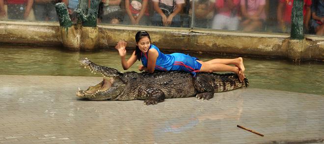 tiger zoo thailand