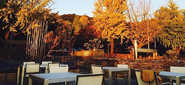 Hasil gambar untuk autumn cafe in south korea