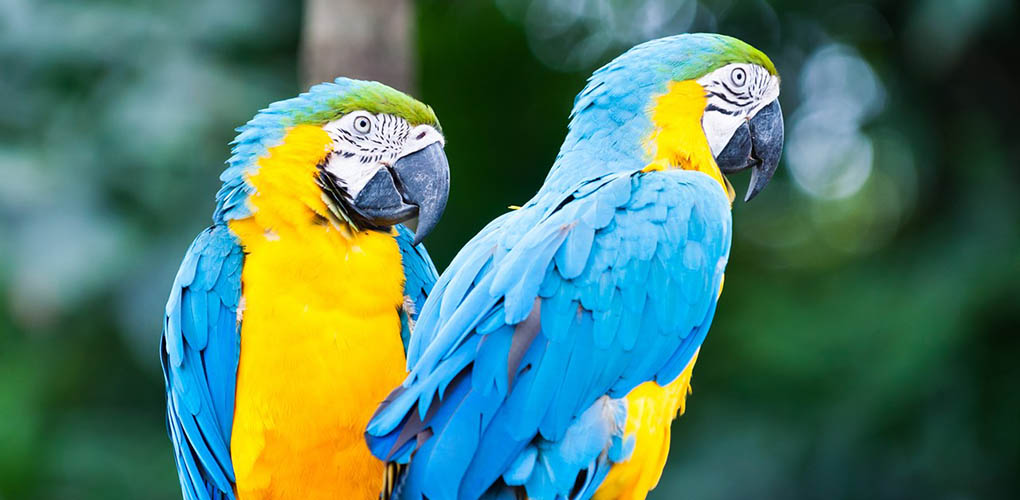 Phuket Bird Park Ticket,Phuket Bird Park Entrance Fee,Thailand Birds Park Visit,Phuket Bird Park Price,Phuket Bird Park Location,Phuket Bird Park Map,Phuket Bird Park Show Time,Phuket Bird Park Address,Phuket Bird Park Visit