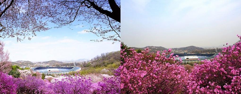 Wonmisan Mountain Azalea Festival Day Tour