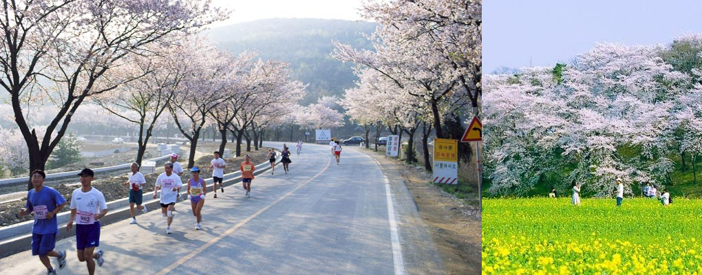 Gyeongju Rape Flower Field Day Tour from Busan, Gyeongju Tour