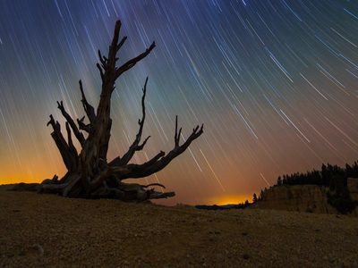 Star trails and a bristlecone pine at Bryce Canyon National Park, Utah (© roycebair/RooM/Getty Images)
