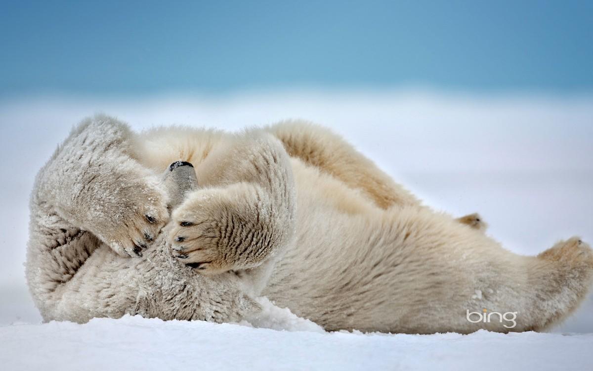 động vật nô đùa trong tuyết.7